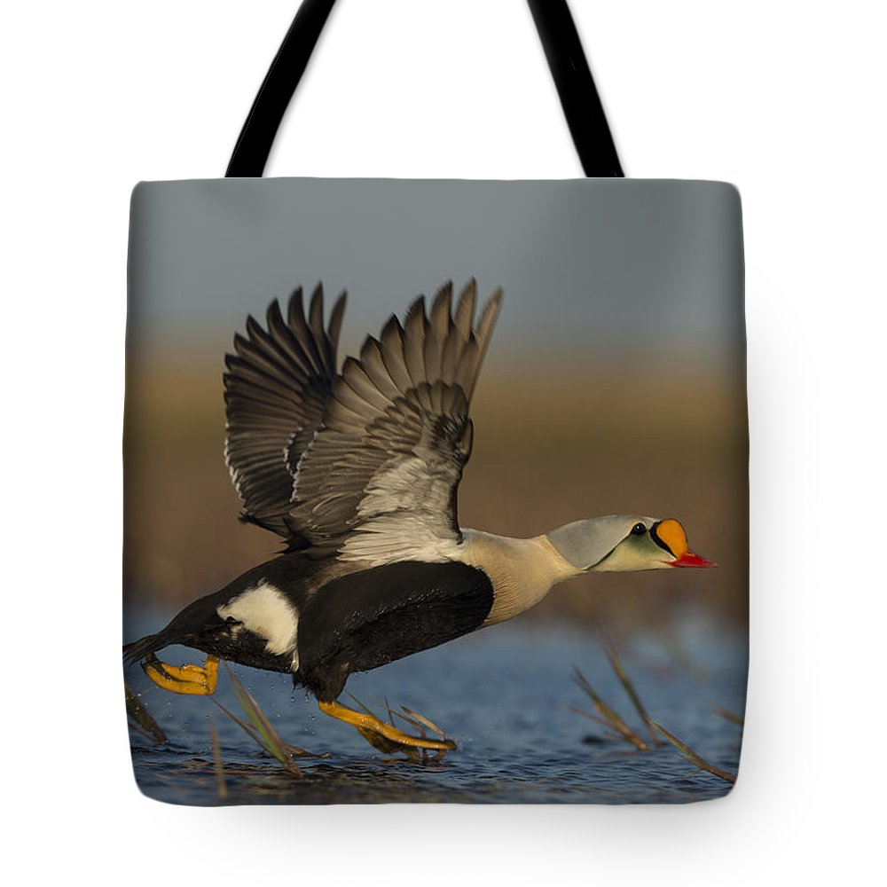 King Eider Tote Bag featuring the photograph King Eider by Tom Ingram