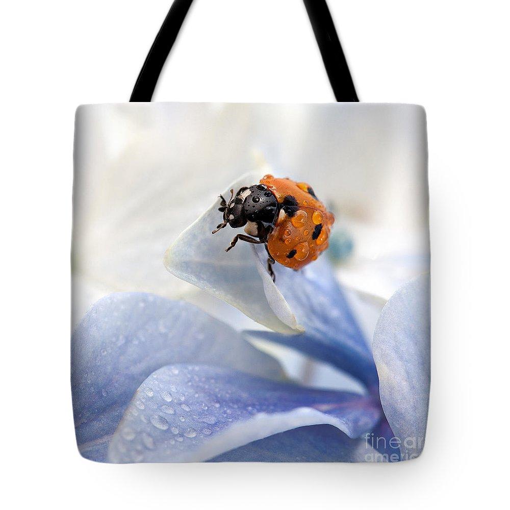 Ladybird Lifestyle Products