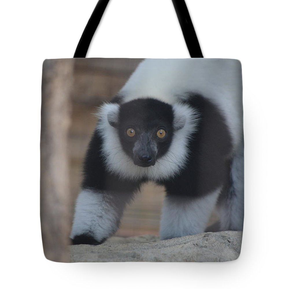 Wildlife Tote Bag featuring the photograph Lemur by Brad Kennedy