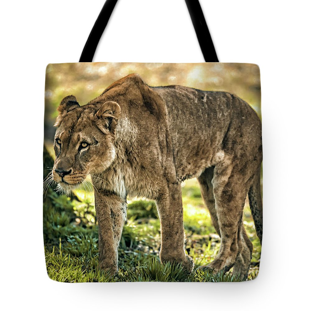 Animal Tote Bag featuring the photograph Lioness by Chris Boulton