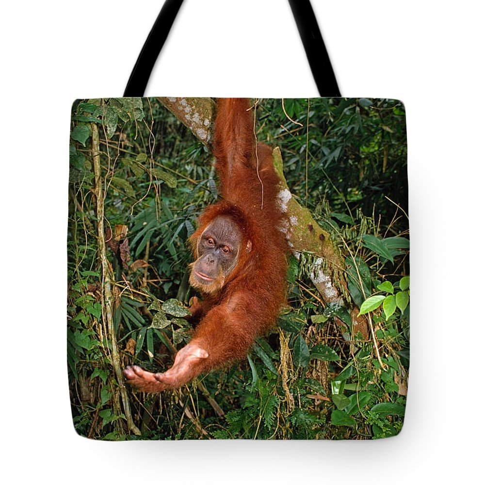 Orangutan Tote Bag featuring the photograph Looking For A Handout by Michele Burgess