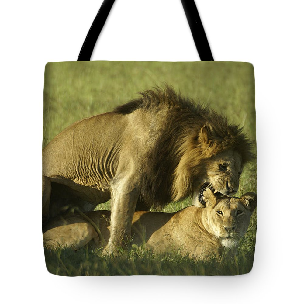 Africa Tote Bag featuring the photograph Love Bite by Michele Burgess