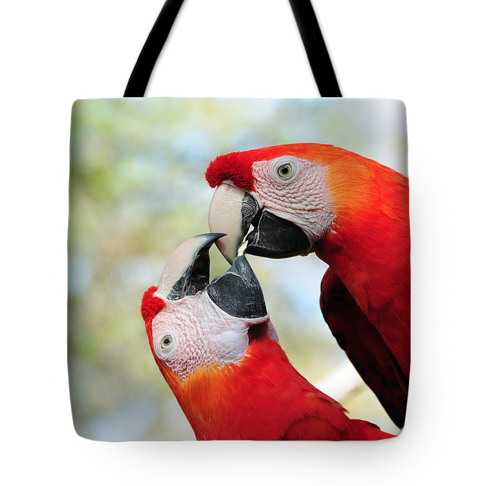 Bird Tote Bag featuring the photograph Macaws by Steven Sparks
