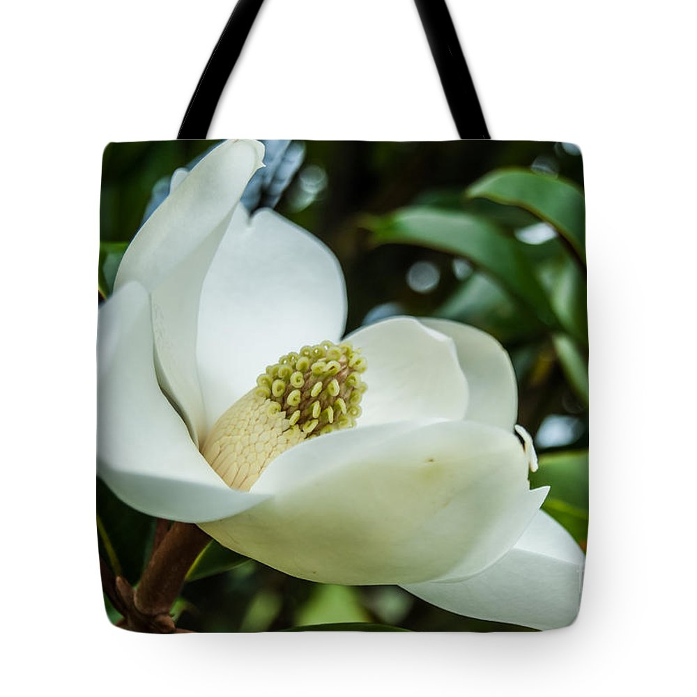 Magnolia Tote Bag featuring the photograph Magnolia Bloom IIi by Pamela Williams