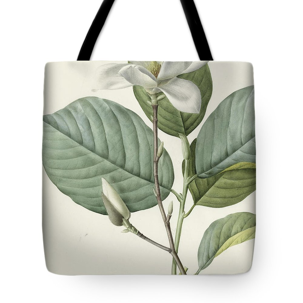 Magnolia Tote Bag featuring the painting Magnolia by Pierre Joseph Redoute