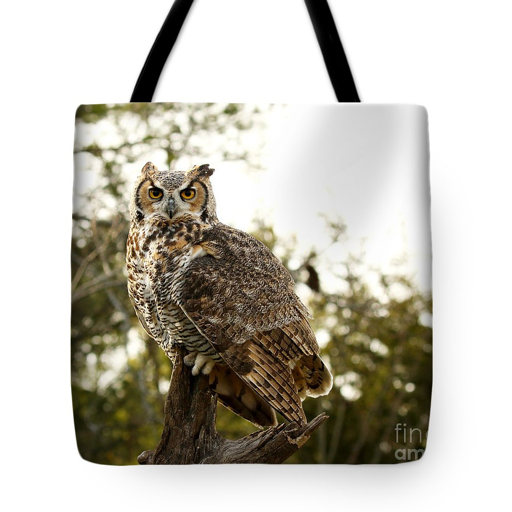 Great Horned Owl Tote Bag featuring the photograph Malicious Intent by Heather King