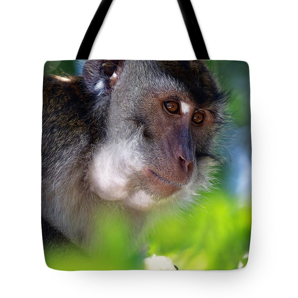 Mauritian Cynomolgus Macaques Tote Bag featuring the photograph Mauritian Cynomolgus Macaques In The Wild by Marek Rutkowski