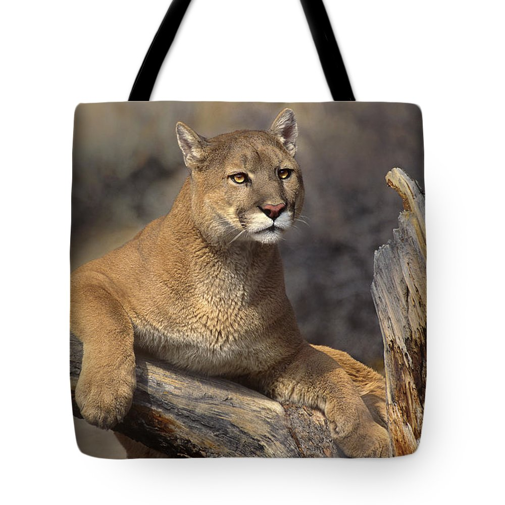 Dave Welling Tote Bag featuring the photograph Mountain Lion Felis Concolor by Dave Welling