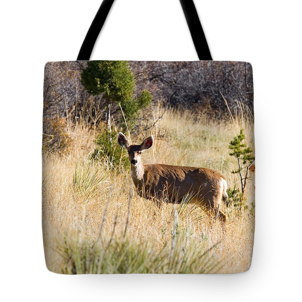 Deer Tote Bag featuring the photograph Mule Deer In Garden Of The Gods by Steve Krull
