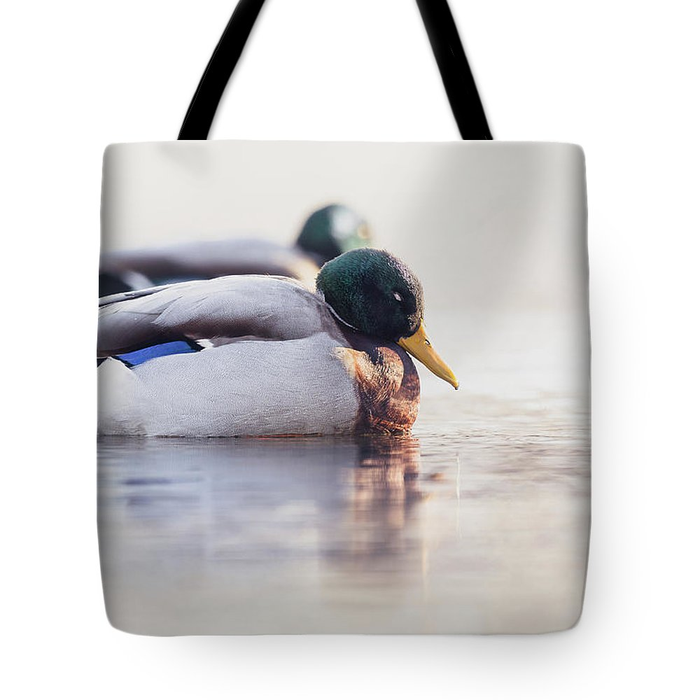Bird Tote Bag featuring the photograph Napping by Annette Bush