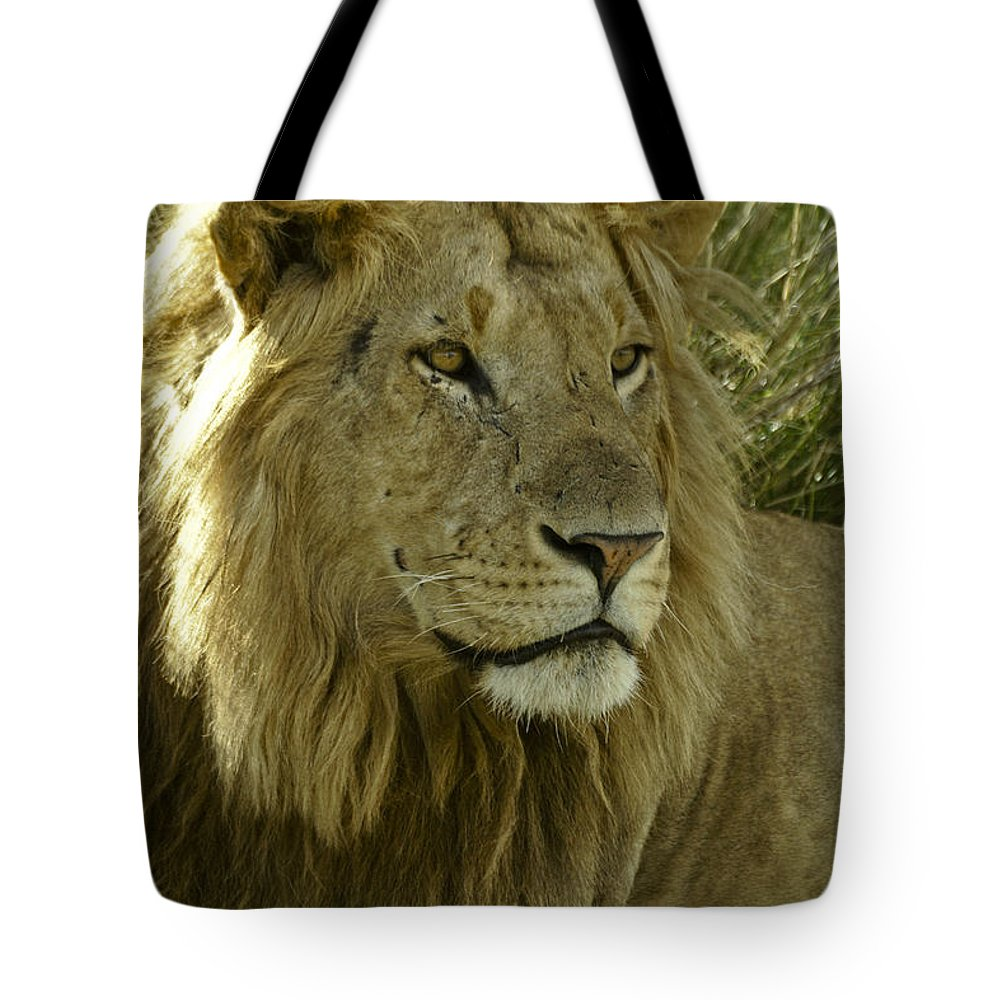 Lion Tote Bag featuring the photograph Nice Kitty by Michele Burgess