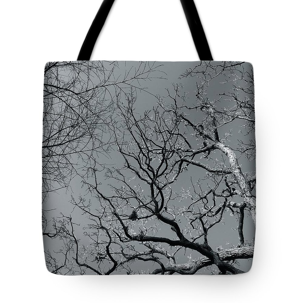 Trees Tote Bag featuring the photograph oak by Julian Grant