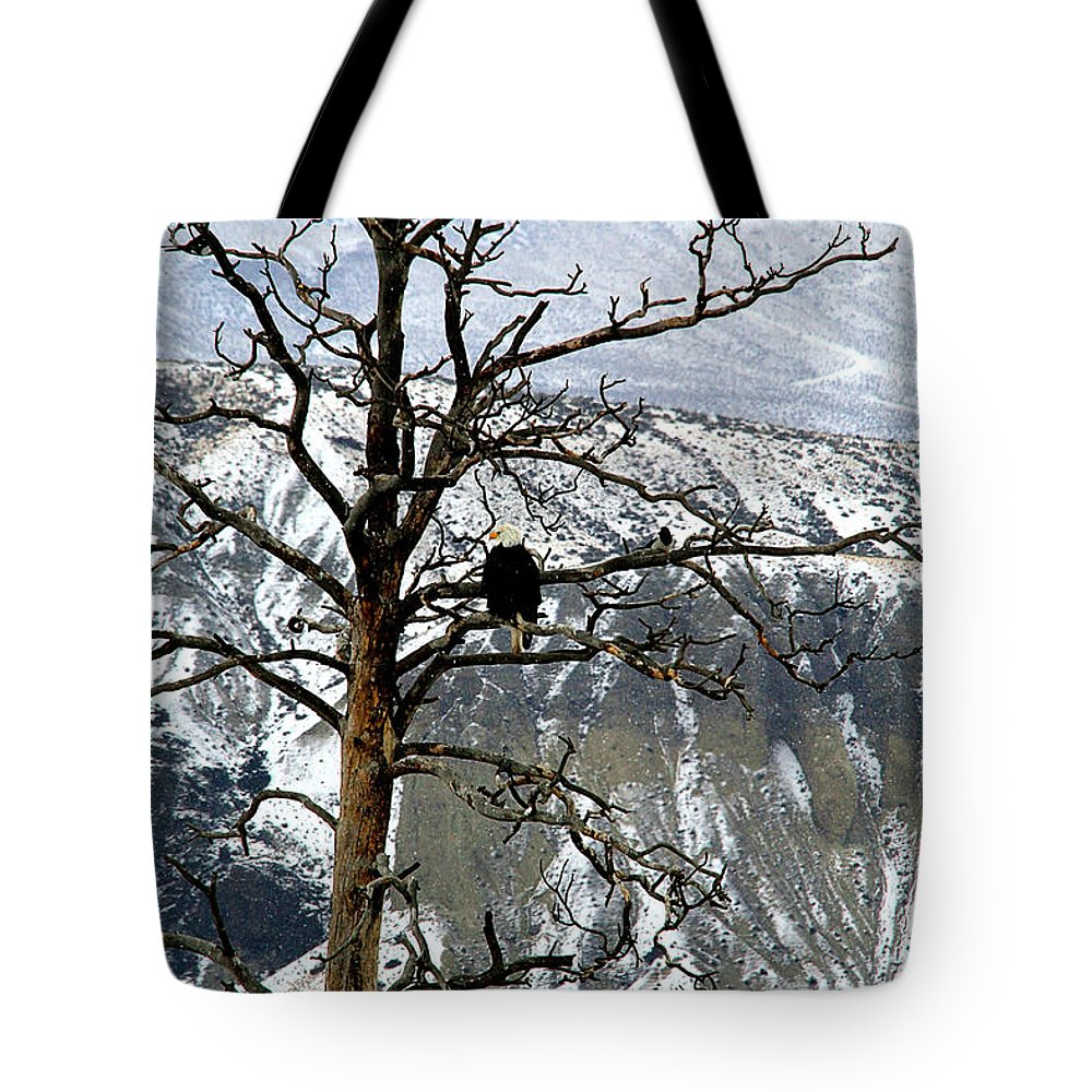 Eagles Tote Bag featuring the photograph On The Lookout by Roland Stanke