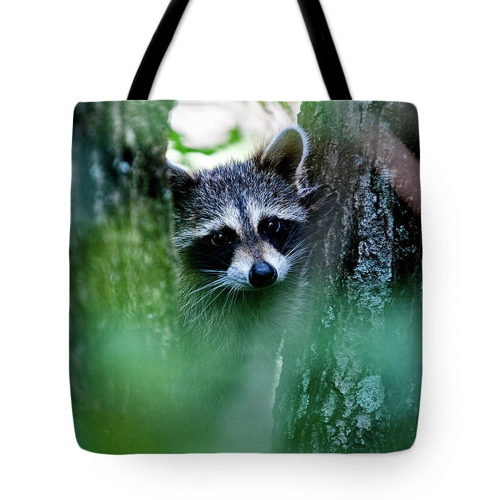 Racoon Tote Bag featuring the photograph On Watch by Christopher Holmes