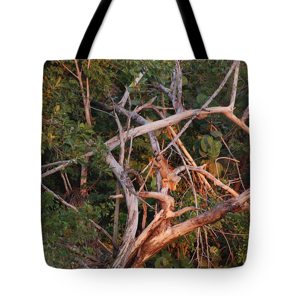 Sunset Tote Bag featuring the photograph Orange Iguana by Rob Hans
