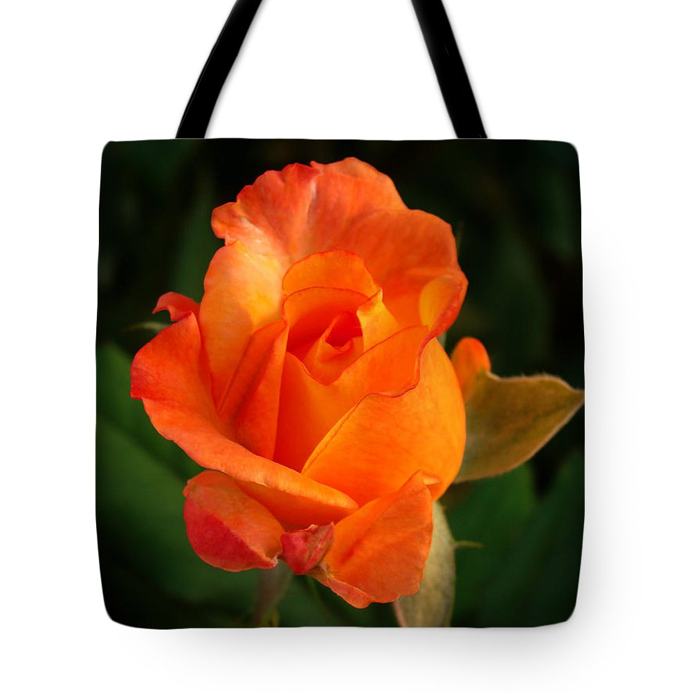 Rose Tote Bag featuring the photograph Orange Rose by Sandy Keeton