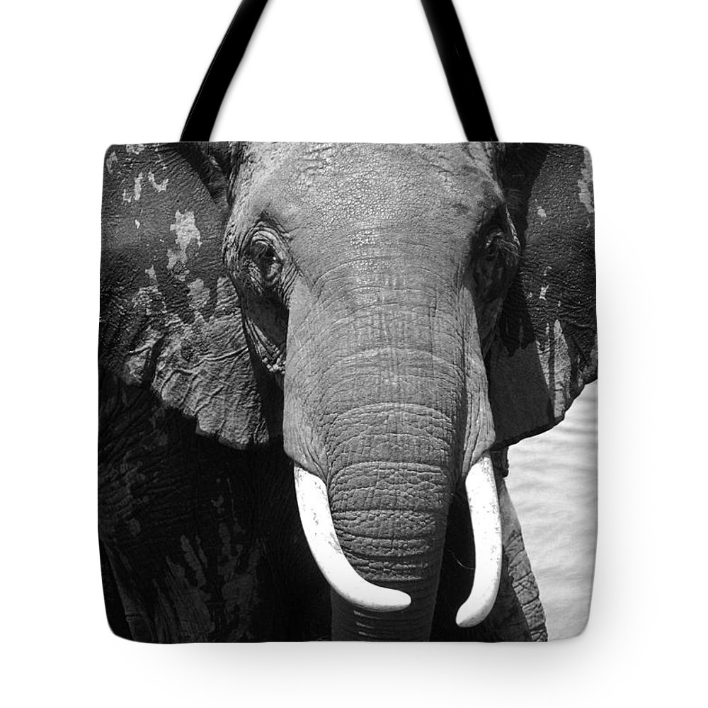 Africa Tote Bag featuring the photograph Outta My Way by Michele Burgess