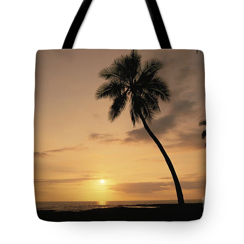 Afternoon Tote Bag featuring the photograph Palm At Sunset by Greg Vaughn - Printscapes