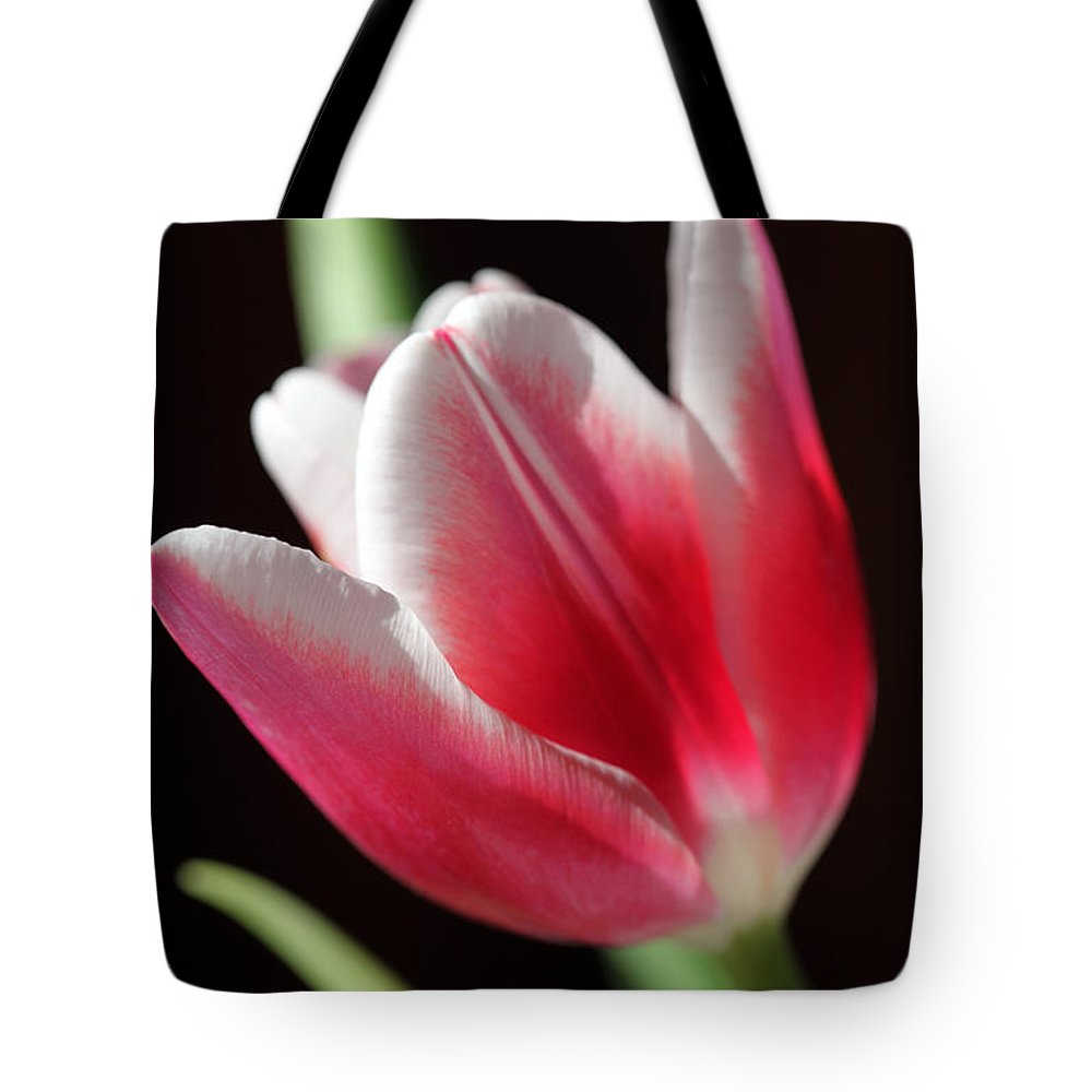 Tulips Tote Bag featuring the photograph Peaceful by Amanda Barcon