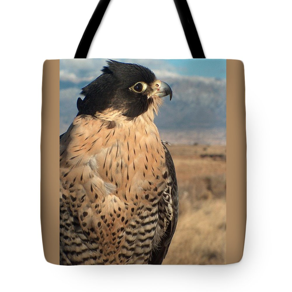 Peregrine Falcon Tote Bag featuring the photograph Peregrine Falcon by Tim McCarthy