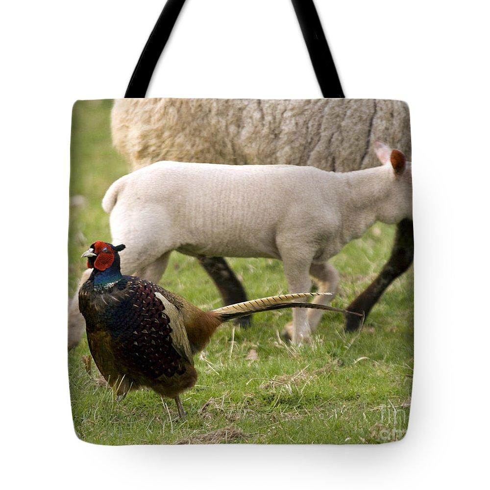 Pheasant Tote Bag featuring the photograph Pheasant And Lamb by Angel Ciesniarska