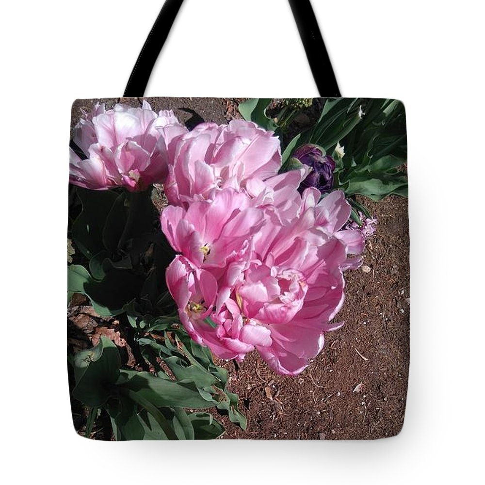 Pink Peony In Spring In Botanical Garden Tote Bag featuring the photograph Pink Peony by Connie Du