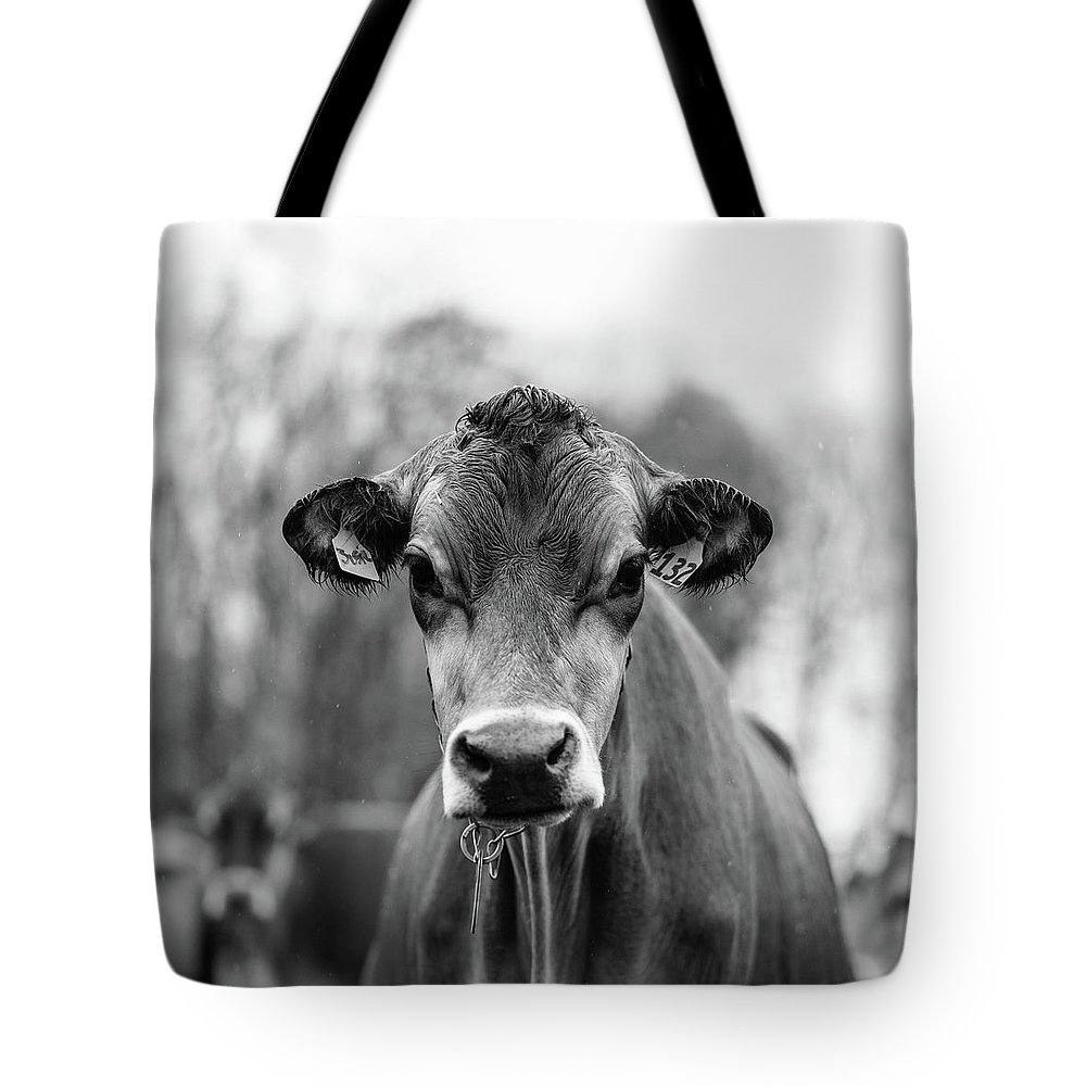 Livestock Tote Bag featuring the photograph Portrait Of A Dairy Cow In The Rain Stowe Vermont by Edward Fielding