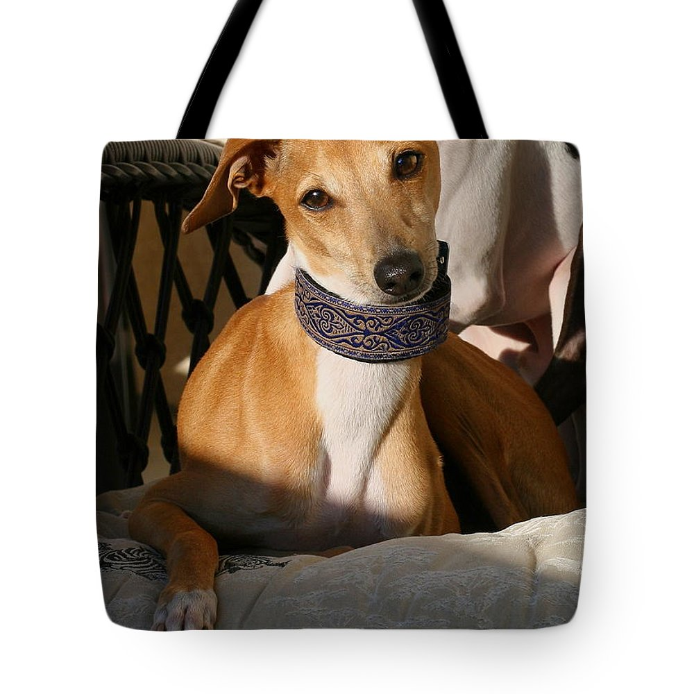 Editorial Tote Bag featuring the photograph Portrait Of An Italian Greyhound by Angela Rath