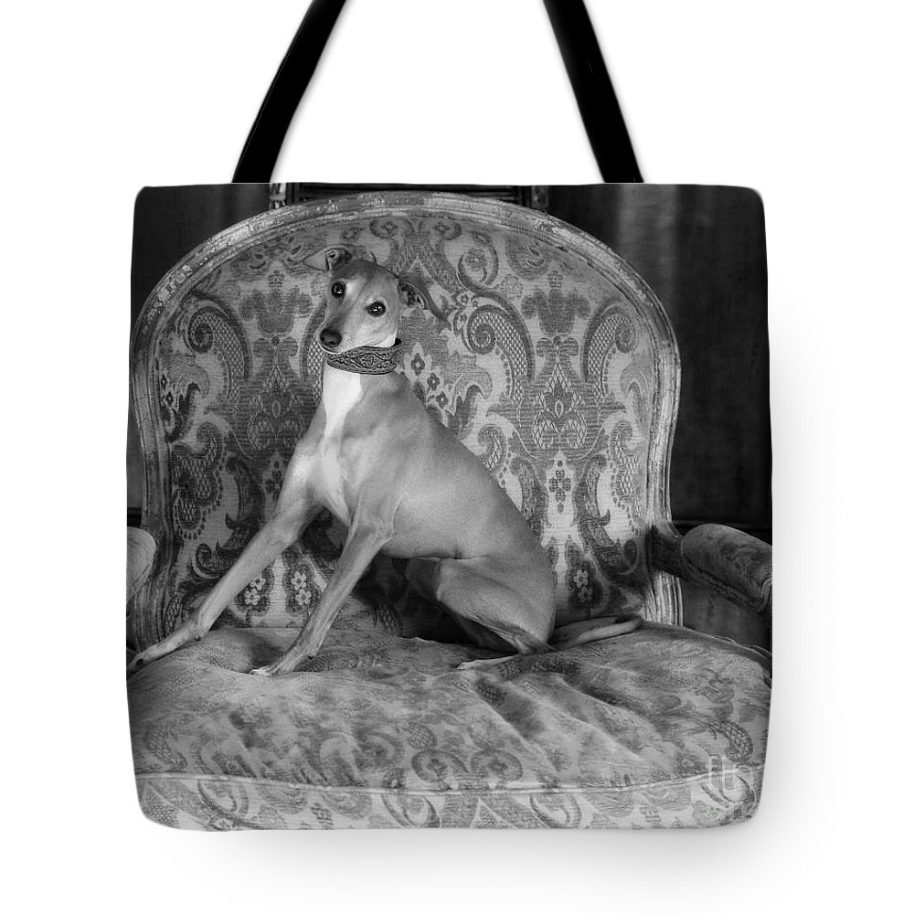 Editorial Tote Bag featuring the photograph Portrait Of An Italian Greyhound In Black And White by Angela Rath