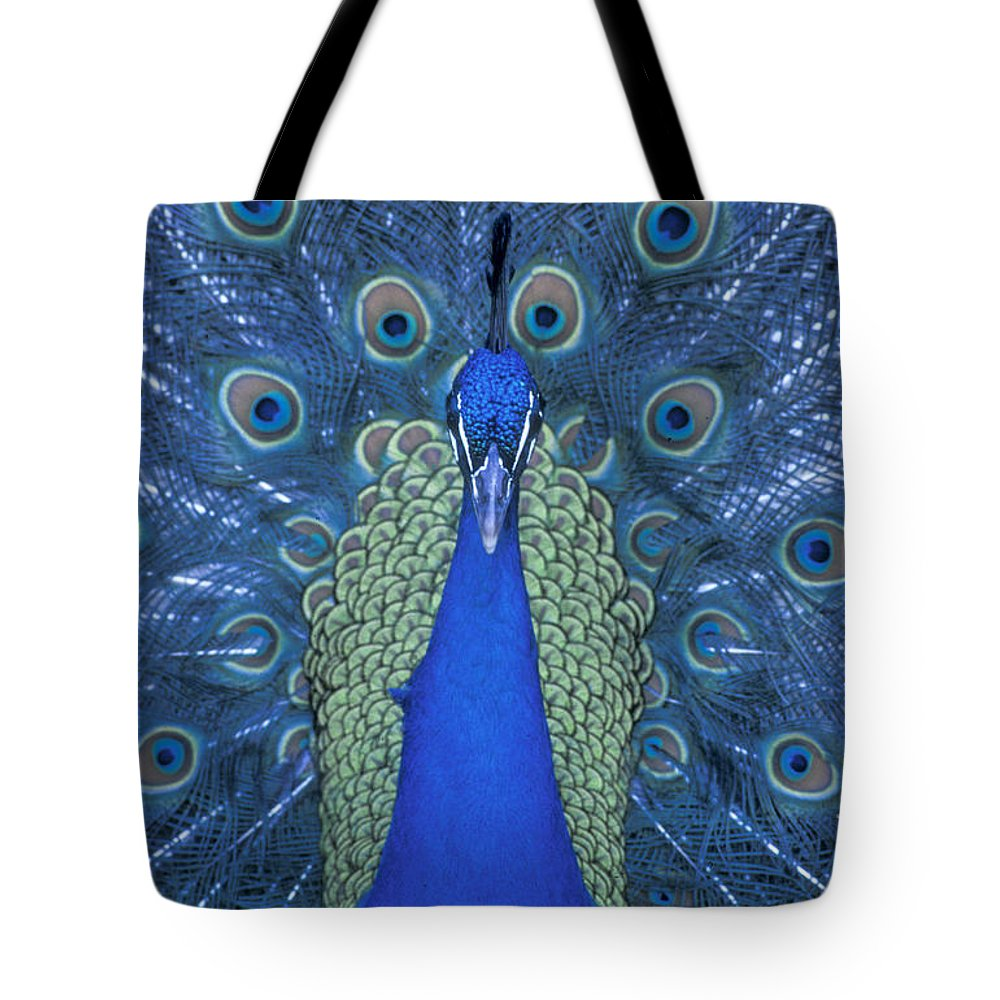 Peacock Tote Bag featuring the photograph Proud Peacock by Sandra Bronstein