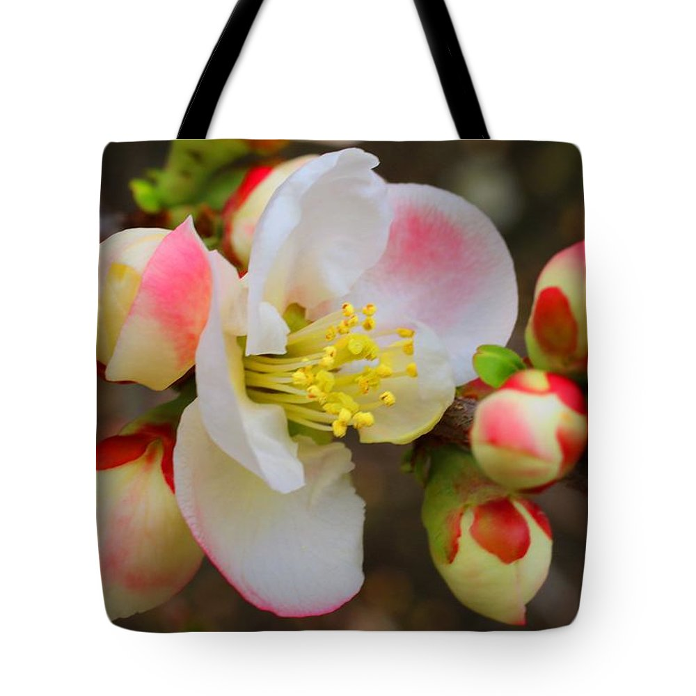 Quince Tote Bag featuring the photograph Quince Toyo-nishiki by Kathryn Meyer