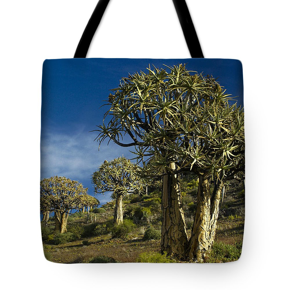 Africa Tote Bag featuring the photograph Quiver Tree Forest by Michele Burgess