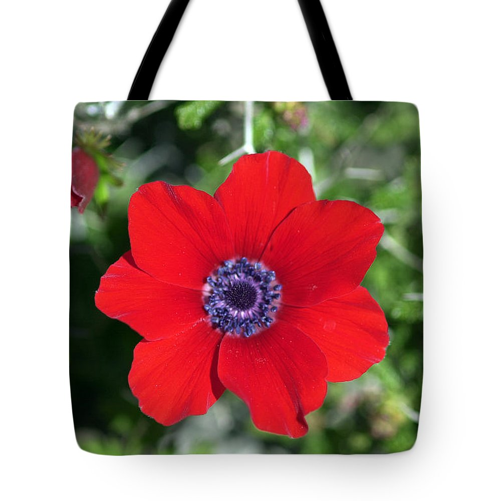 Flower Tote Bag featuring the photograph Red Anemone Coronaria 1 by Isam Awad