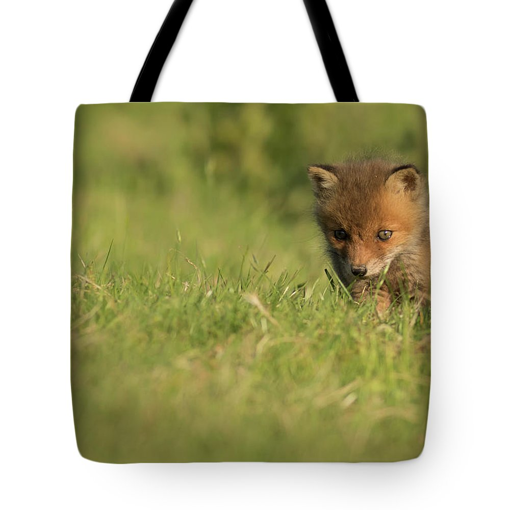 Fox Tote Bag featuring the photograph Red Fox Cub by Ian Hufton