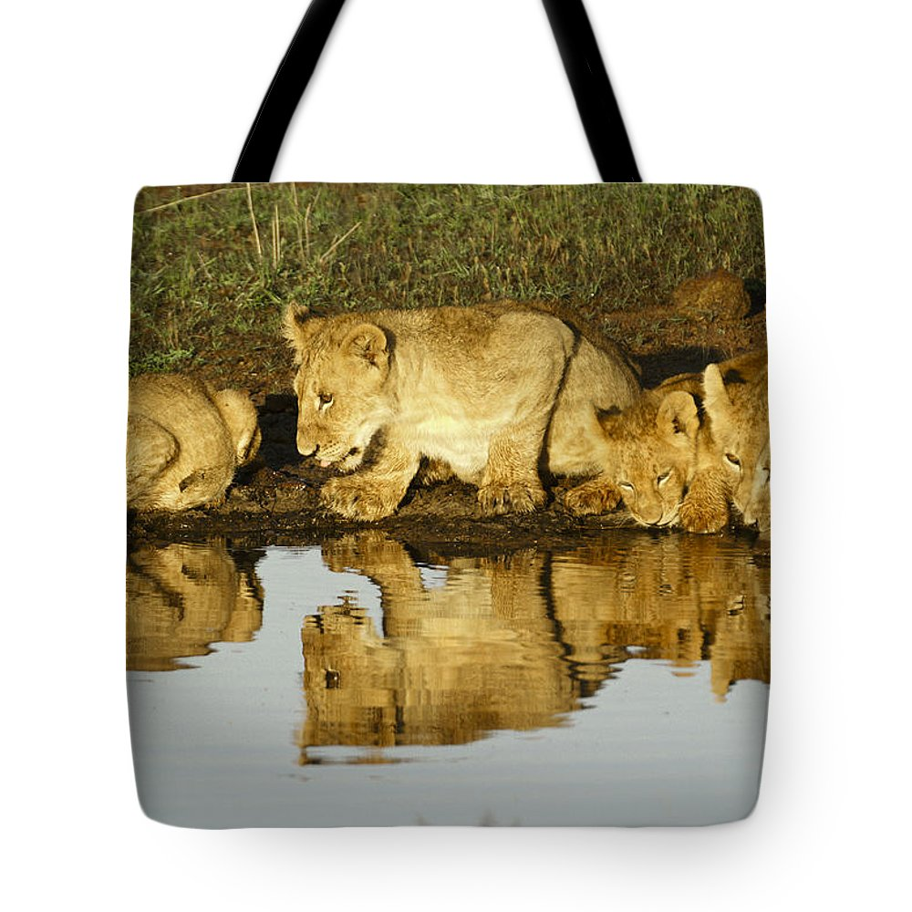 Lion Tote Bag featuring the photograph Reflected Lions by Michele Burgess