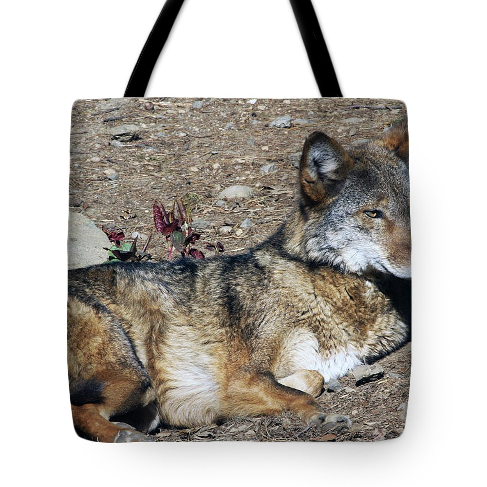 Wolf Tote Bag featuring the photograph Resting Wolf by Karol Livote