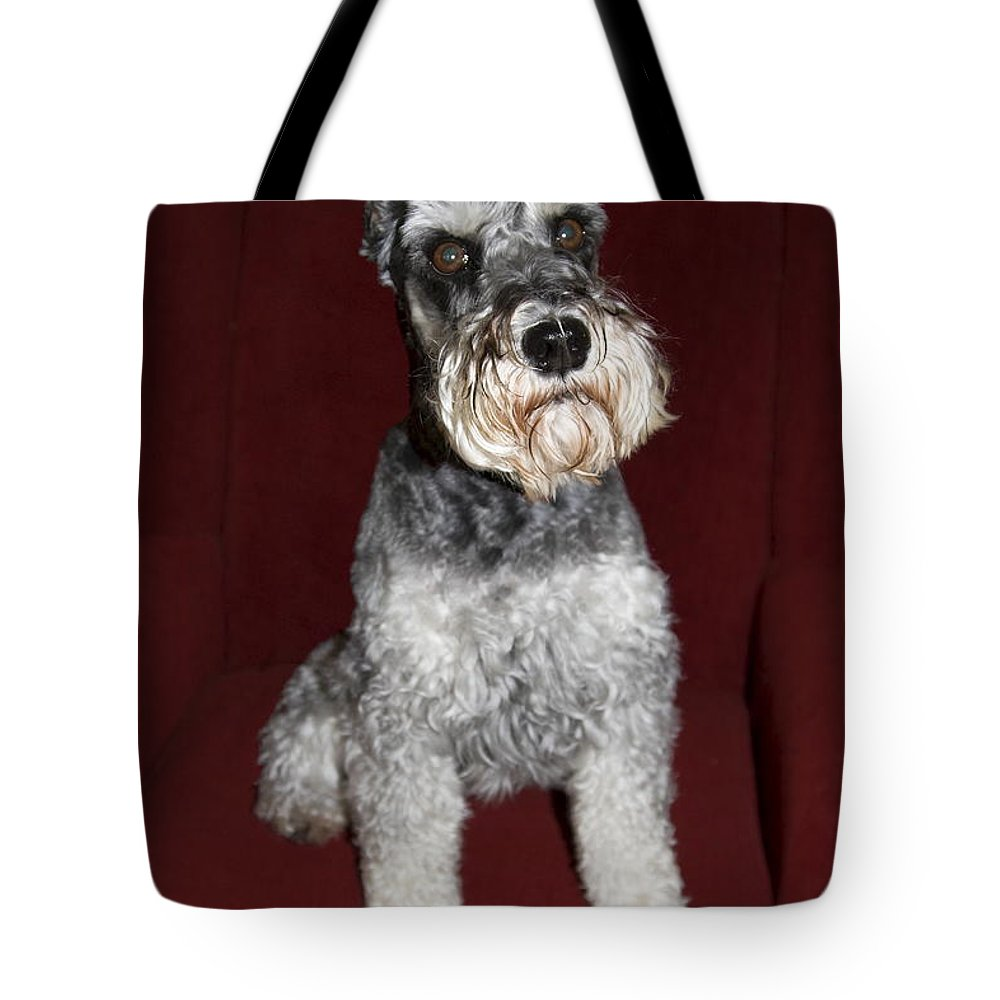 Schnauzer Dog Sitting On Red Wing Chair Tote Bag featuring the photograph Schnauzer Portrait by Sally Weigand