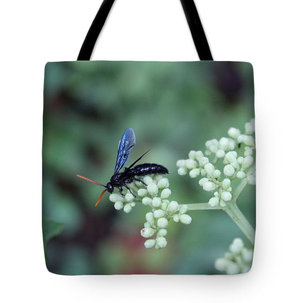 Tote Bag featuring the photograph Search by Arnab Mukherjee
