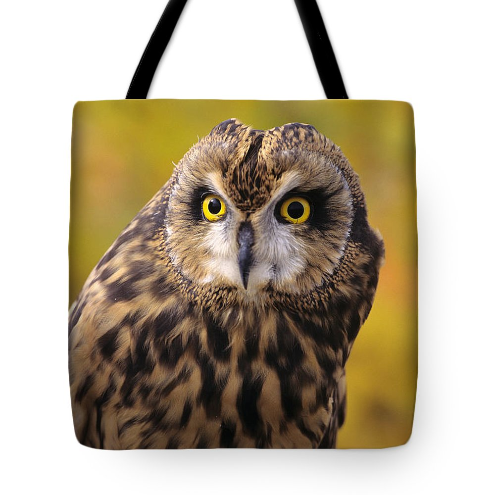 Animal Art Tote Bag featuring the photograph Short Eared Owl by John Hyde - Printscapes