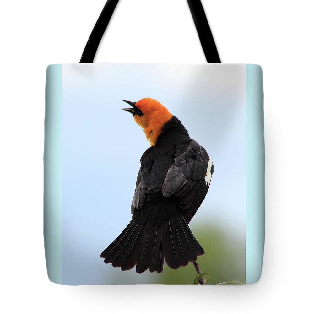 Yellow-headed Blackbird Tote Bag featuring the photograph Showing Off by Shane Bechler