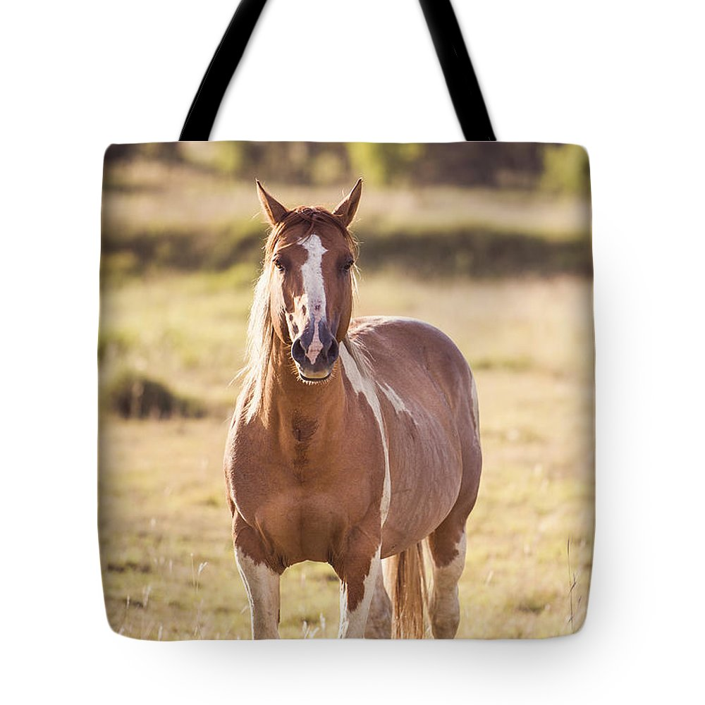 Animal Tote Bag featuring the photograph Single Horse by Rob D