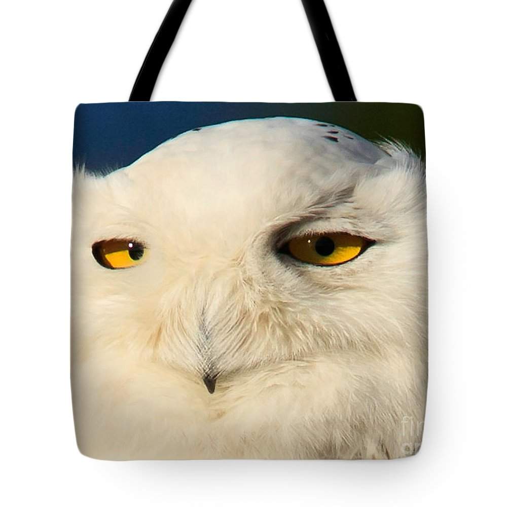 Snowy Owl Tote Bag featuring the photograph Snowy Owl by Tim Hauf