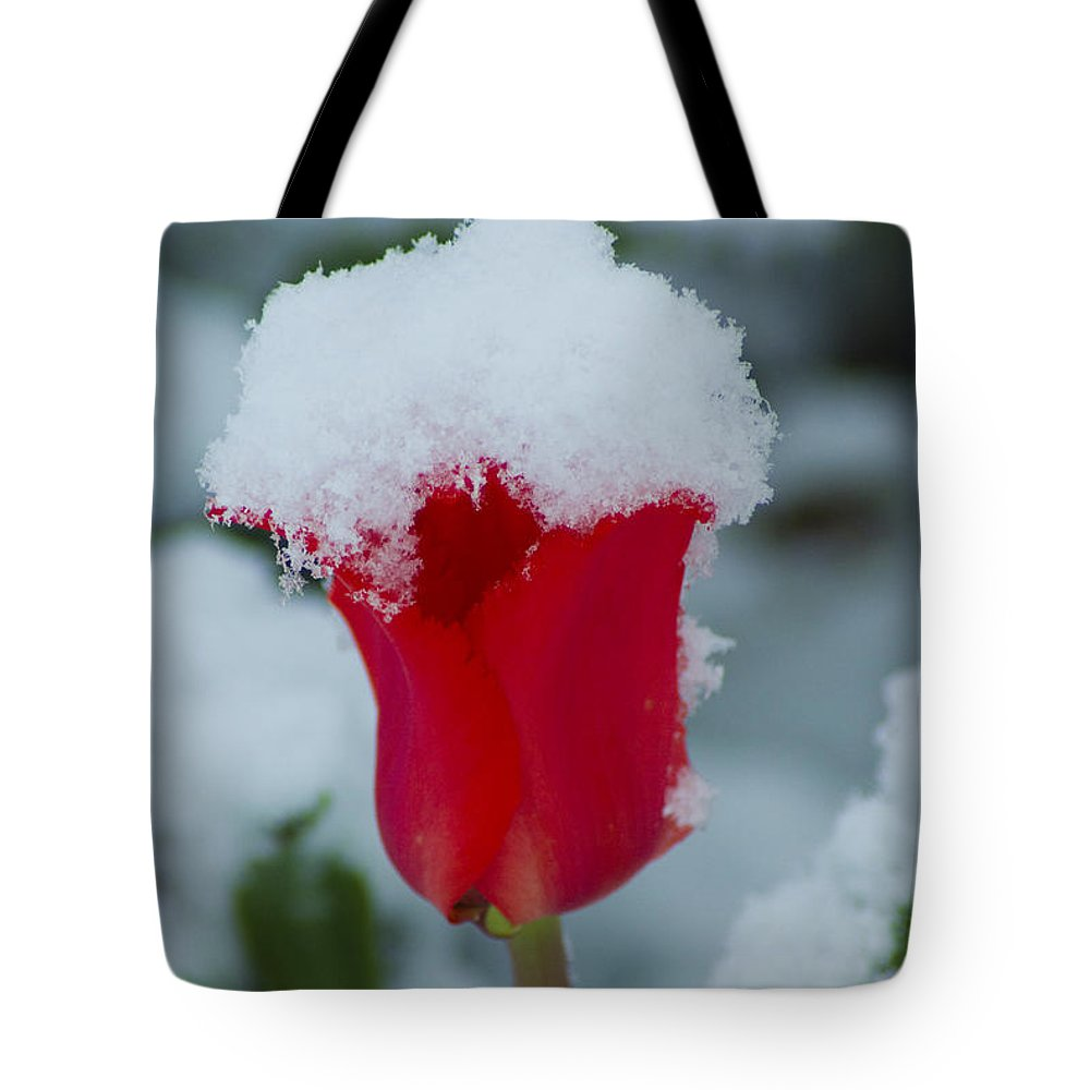 Tulip Tote Bag featuring the photograph Snowy Red Riding Hood by Louise Magno