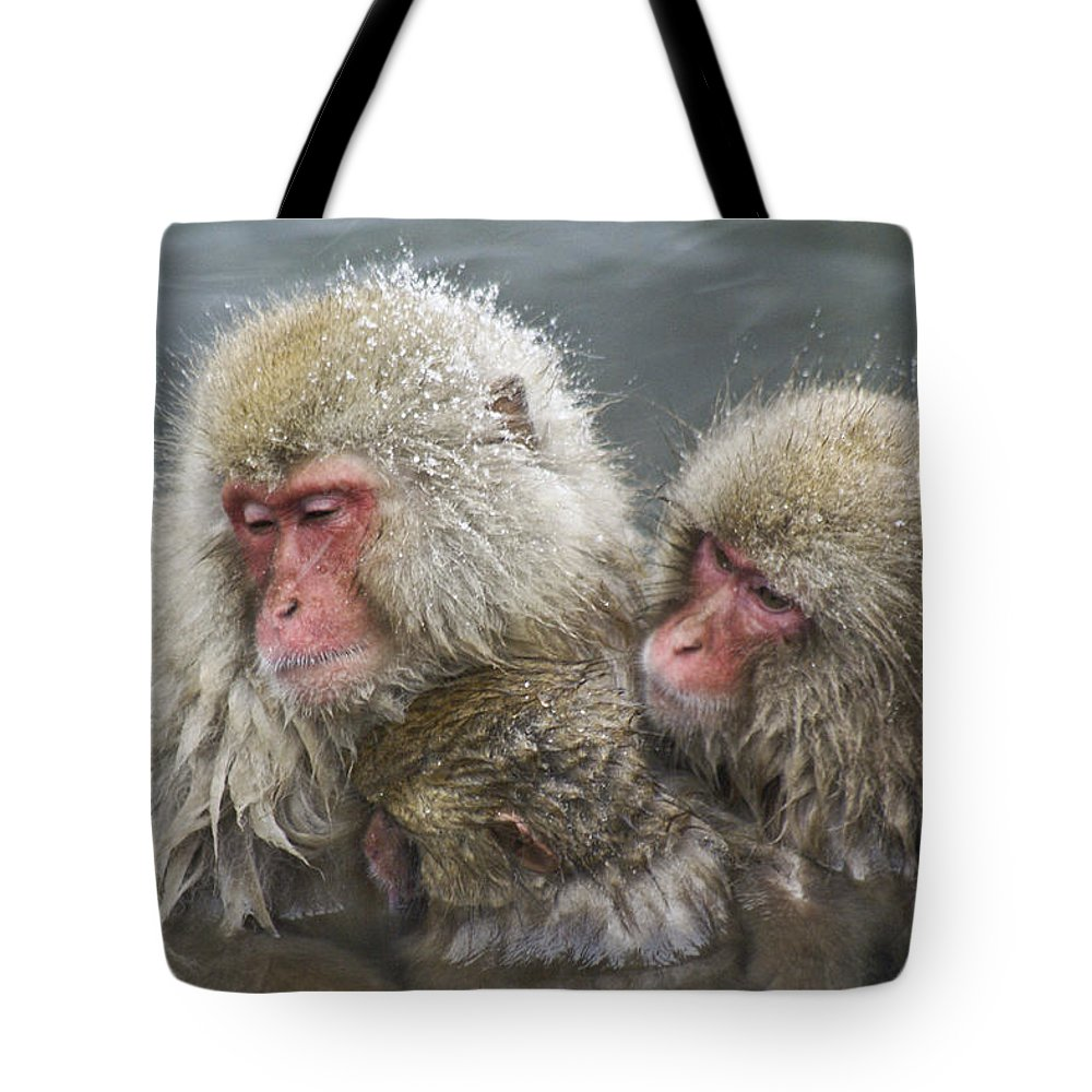 Snow Monkey Tote Bag featuring the photograph Snuggling Snow Monkeys by Michele Burgess