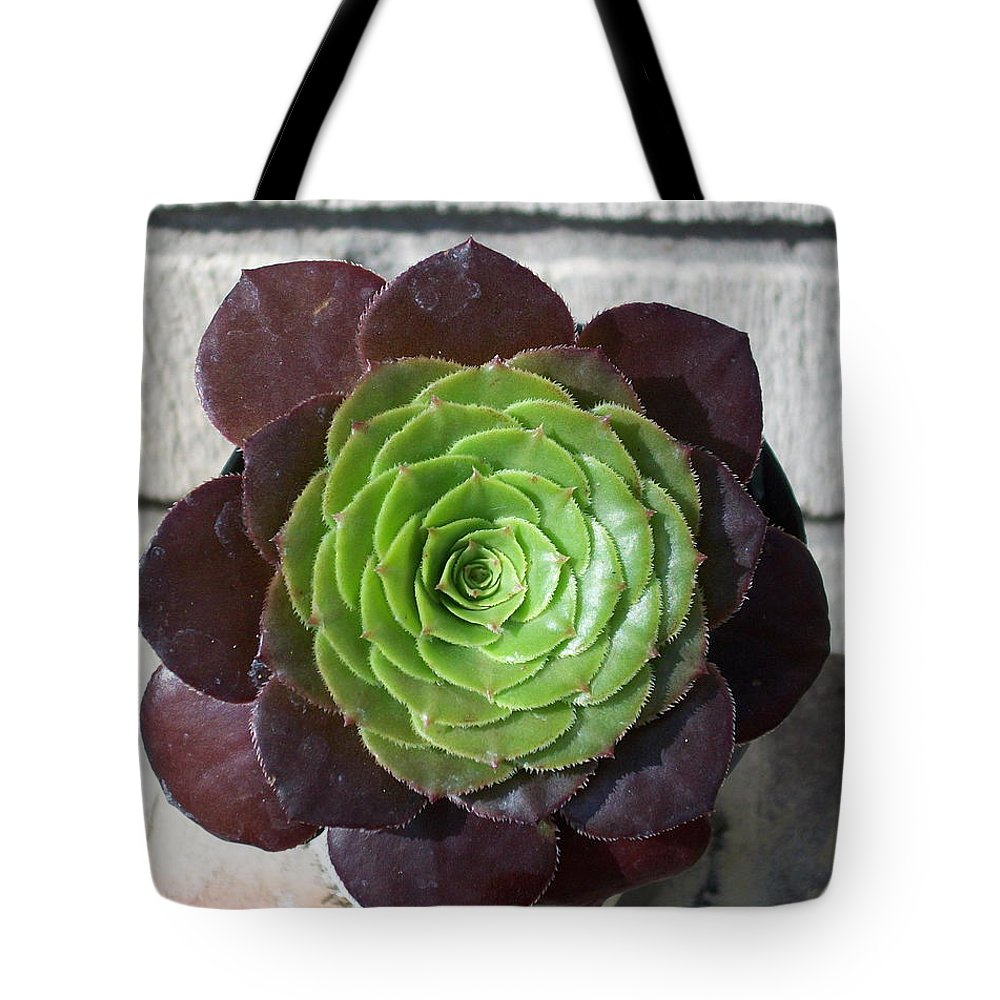 Succulents Tote Bag featuring the photograph Succulent Rose by Laurette Escobar