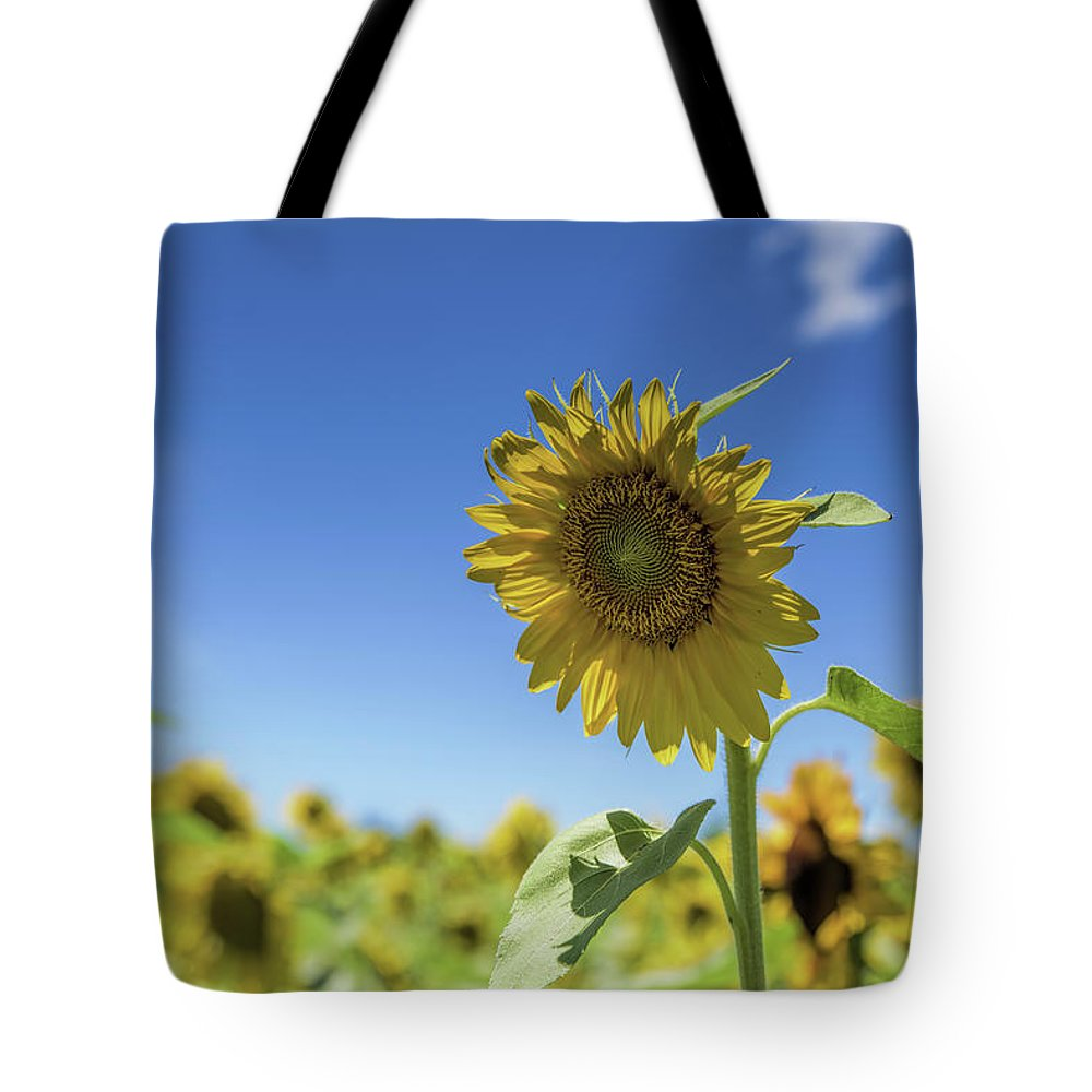 Buttonwood Farm Tote Bag featuring the photograph Sunflower by Dennis DiMauro Jr