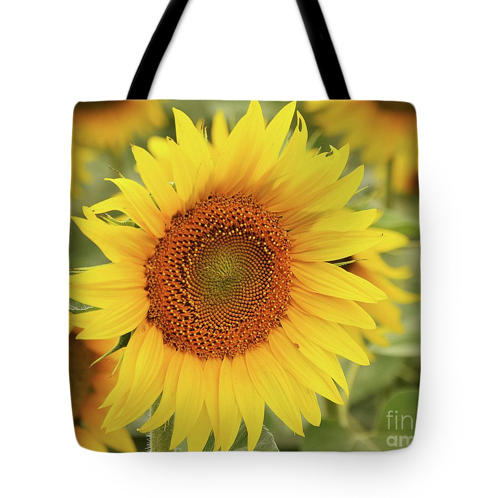 Flowers Tote Bag featuring the photograph Sunflower by Elvira Ladocki