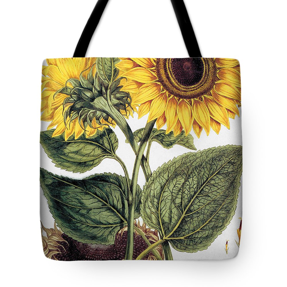 1777 Tote Bag featuring the photograph Sunflower by Granger