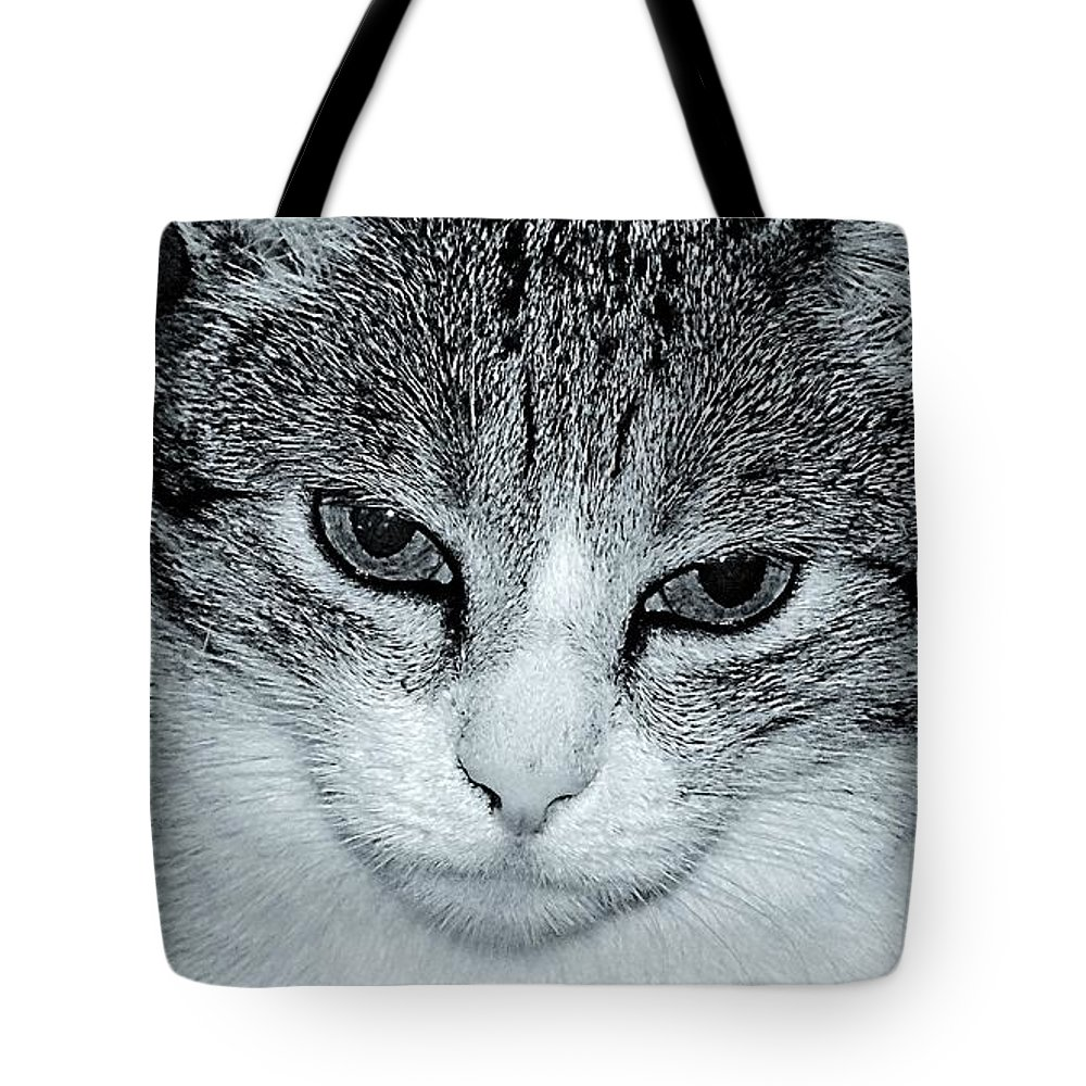 Cat Tote Bag featuring the photograph The Cat's Innocense by Gianni Bussu