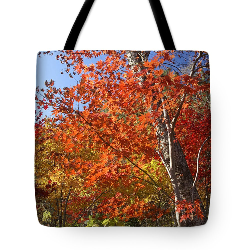 Autumn Tote Bag featuring the photograph The Colors Of Autumn by Michele Burgess